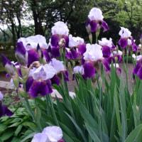 5月の花画像