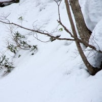 三月下旬 裏山はまだまだ冬です
