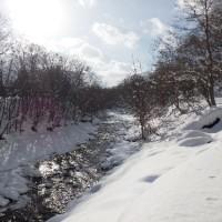 12月18日(日)ときわ自然散歩の様子
