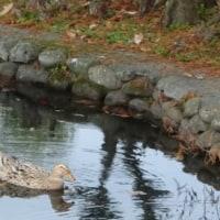 ルーさんと神柱公園を訪ねる。