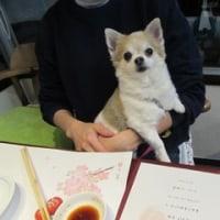 2017.3.17のわんちゃん(*^^)v