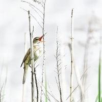 藤前の野鳥