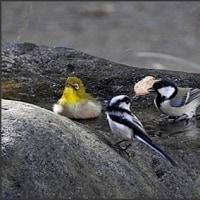 毎度、お馴染みの野鳥!