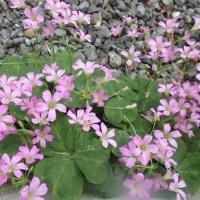 隠れ処の草花