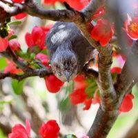 蜜を吸うヒヨドリ
