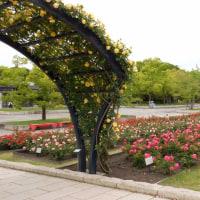 万博記念公園5月の花