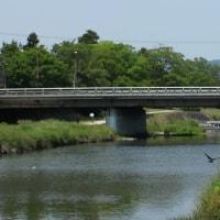 京都鴨川デルタ