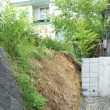 先日の雨で土が流れて