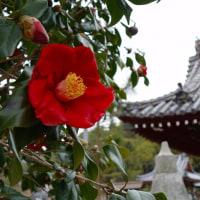 初の備後国分寺の春…でも桜はまだですけど