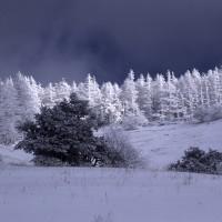 '17年「冬ごもり」 (35)