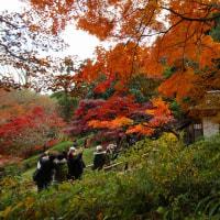 三渓園・紅葉Ⅱ