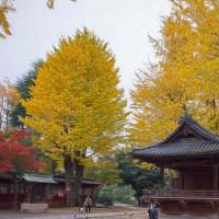 2016.11.20 文京区: 根津神社の紅葉