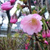 17-04-22 開花