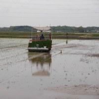 平成29年産、常陸小田米の田植えがスタートしました。