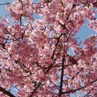 季節は春を纏おうとしているのに