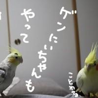 夕刊の日(2月25日)