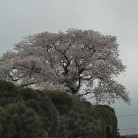 母の49日の法要で神奈川の霊園に行ったが・・・