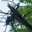 裏磐梯の樹々と遊ぶ(Ⅸ)