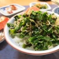 ご飯のともに、菜とジャコと山椒の実で… ^_^