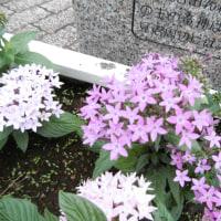 ブラコビーin埼スタ公園3