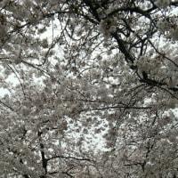春の花が勢ぞろい!