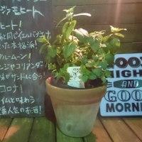 スリーアミーゴス with ぬ-3