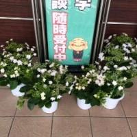 「墨田の花火」