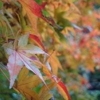 秋の鎌倉散歩♪「覚園寺」、(2016秋)。