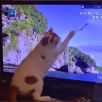猫の日だってさ!