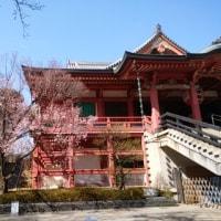 2017年3月23日 木曜日 目黒不動尊の桜