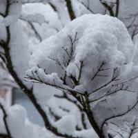 今回の雪は本格的だ
