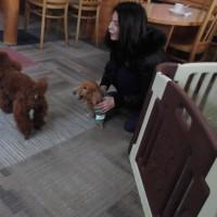 U^ェ^U犬のしつけ 犬の幼稚園 Buddy Dogのようす 2014/02/24U^ェ^U