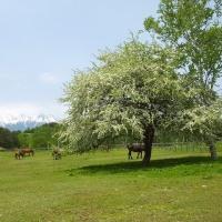 17年5/29~木曽馬牧場~新緑