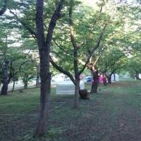 津軽森2017明日から〜(^o^)/