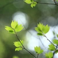 緑色の季節