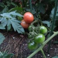 スイカとトマト