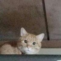 猫踏んじゃった😢