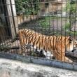 3回目の動物園へ