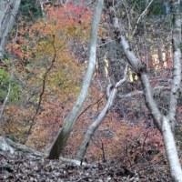 紅葉は終わっていた根本山