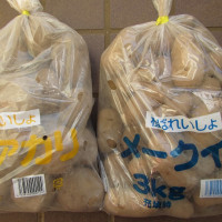 1月23日・ジャガイモの種芋をHCで買いました!