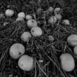 林檎の近況