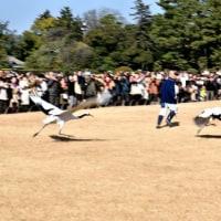 初日の出とめでたい鶴の放鳥を見にてくてくしてきた~~~