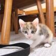 仔猫の便秘