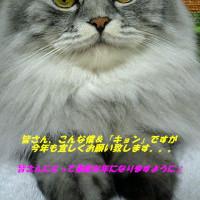 ☆★☆明けましておめでとうございます☆★☆
