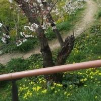 山下公園チャリティーイベント