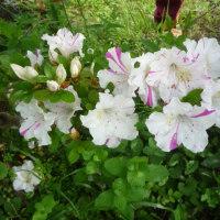 今週の花 その2