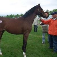 2009年募集馬 社台・サンデー牧場見学ツアー その3