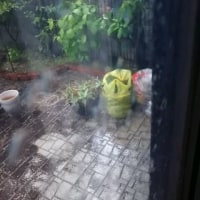 突然・・・驟雨・・(ノД`)・゜・。