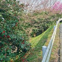 高良山を走る。