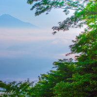 新緑と雲海